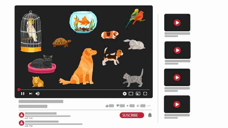 قناة يوتيوب عن الحيوانات الأليفة