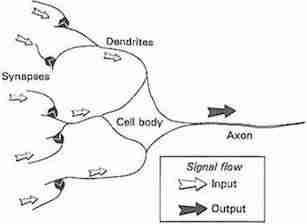 تبسيط لفكرة عمل الخلية العصبية البيولوجية