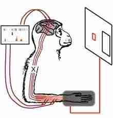 تجربة إعادة توصيل الخلايا العصبية Neural Rewiring Experiment